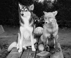 Vrienden Husky, Canvas, Dogs, Animals, Art, Animales, Art Background, Animaux, Doggies