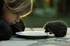 Milk* today, my love is back by Cath Schneider #Photography #Hedgehog