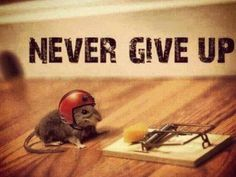 Never give up. . . . . . #Success #CantFail #Fail #Failure #Succeed #Win #Winner #Motivation #Inspiration #Quotes #Inspire #QuoteoftheDay #Productive #Productivity #MotivationalQuotes #Progress #InspirationalQuotes #Entrepreneur #Business #Growth #Smart #Knowledge #Intelligence #Wisdom #Future #Strength #Beautiful #Love #Work #HardWork