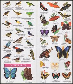 RAINFOREST PUBLICATIONS: Costa Rica Wildlife Guide (Laminated Foldout Pocket Field Guide)
