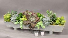 Assorted Succulents arranged perfectly in a long rectangular planter. Measures 22