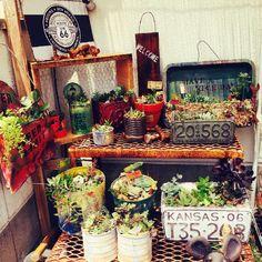 junkの画像 by *Shiori* さん|多肉植物とサビ缶とリメ缶 手作りリメイク缶とJUNKな寄せ植え (2015月8月1日)|みどりでつながるGreenSnap