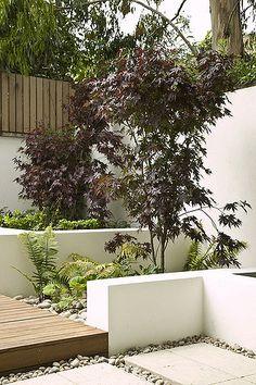 courtyard garden Contemporary, minimal, neutral colours with seasonal accen Contemporary Garden Design, Landscape Design, Rustic Contemporary, Terrace Garden, Garden Spaces, Modern Landscaping, Backyard Landscaping, Small Gardens, Outdoor Gardens