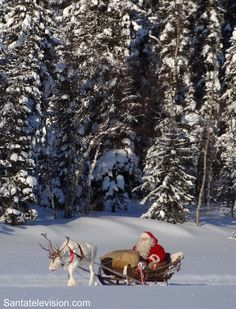 Santa Claus having a reindeer ride in the forest in Lapland