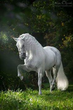 #cavalo