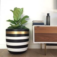 Indoor Plant With Stripes Pot Good Pots For Your Indoor Plants