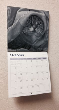 Miss October - Russian Judgmental Cat