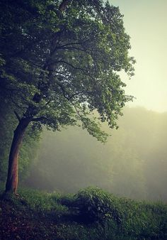 Beautiful tree and mist Beautiful World, Beautiful Places, Beautiful Pictures, Beautiful Scenery, Mother Earth, Mother Nature, Terre Nature, Dame Nature, Tree Forest