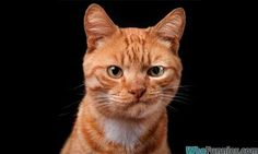 angry_cat