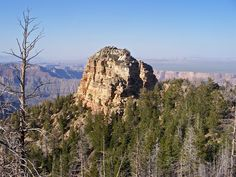Tritle Peak, surrounded by trees