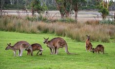Tasmania Nature, National Parks and wildlife