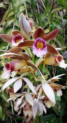 Pharium? Greenhouse, House Plants, Rose, Horticulture, Flowers, Orchid Plants, Rare Flowers