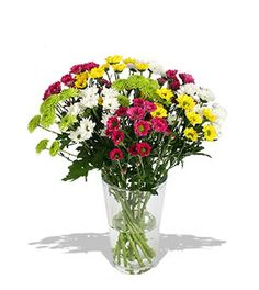 Order this one dozen stunning colorful Malaysian Mums Bouquet for your Cousin to congratulate her on her bar exam. She will love it and thankful to you.