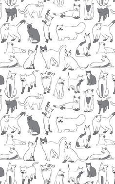 The Feline wallpaper mural by MuralsWallpaper features adorable illustrations of. Tier Wallpaper, Normal Wallpaper, Cat Wallpaper, Unique Wallpaper, Cat Pattern Wallpaper, Whatsapp Wallpaper, Cat Pose, Illustration Art, Illustrations
