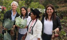 """Lagarde alaba en Perú a los jóvenes emprendedores como motores de innovación  Lima, 4 de diciembre de 2014  La directora gerente del FMI, Christine Lagarde , junto a la primera dama de Perú, Nadine Heredia, durante la visita a los programas sociales que ejecuta el Gobierno peruano en Ayacucho.  Infolatam/Efe  En el encuentro, titulada """"Emprendimiento en América Latina: Retos y Oportunidades"""", Lagarde defendió además la importancia de enfrentarse al fracaso como base de la innovación."""