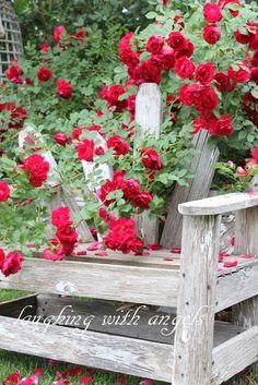 Lovely garden..
