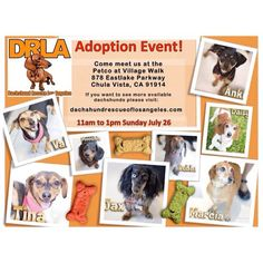 Chula Vista CA: Foster for Dachshund Rescue of Los Angeles