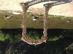 Arch by the river By Sonia at Gray's flower garden