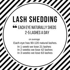 "31 Likes, 2 Comments - HD Beauty (@hdbeautyllc) on Instagram: ""Why fills are needed #delraylashes #lashshedding #eyelashextensions #lashfacts"""