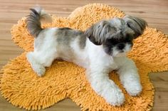 Tosatrice Per Cani Moser Max 45 http://www.principini.it/prodotti/cani/tosatrice-per-cani-moser-max-45