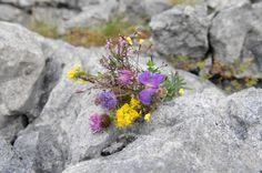 Flowers in Ireland Flowers.org.uk