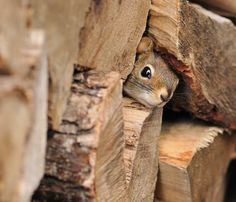 Hiding in the woodpile