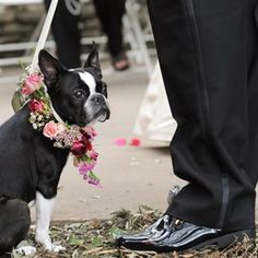 """""""I've never been so nervous! I hope I don't mess anything up.""""   21 Adorable Dogs Who Completed The Wedding Day"""