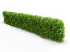 Good Free of Charge Garden Plans photoshop Concepts What should I plant?, Good Free of Charge Garden Plans photoshop Concepts What should I plant? Photoshop, Privet Hedge, Lavender Hedge, Hedges Landscaping, Flower Hedge, Evergreen Hedge, Indian Wedding Couple Photography, Tree Plan, Shadow Photos