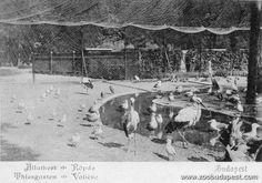 Budapest ZOO Állatkerti madárröpde a XIX. század utolsó éveiben. Az egzotikus nagyemlősökből egyre kevesebb volt, a hiányzó nagyvadakat kisebb madarakkal pótolták