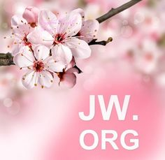 jw.org in Cherry Blossom Picture.