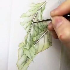 "4,684 Likes, 11 Comments - Watercolor illustrations (@watercolor.illustrations) on Instagram: "" Watercolorist: @helencousinsbotanics #waterblog #акварель #aquarelle #painting #drawing #art…"""