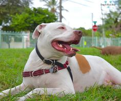 10 myths & facts about deaf dogs.