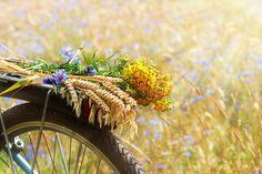 Download Flores do verão imagem de stock. Imagem de outdoors, país - 8233241