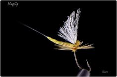 Mayfly by Thomas Roos