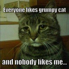 Depressed cat talks about grumpy cat.