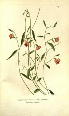 v.2 (1833-1834) - Annales de flore et de pomone : - Biodiversity Heritage Library