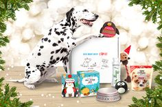 instead of (from Animalbox) for a limited edition Christmas Pawsomebox or Purrfectbox - save Funny Animal Quotes, Funny Picture Quotes, Funny Quotes, Xmas Pictures, Xmas Pics, Uk Deals, Best Shopping Sites, Deal Sale, Christmas Animals