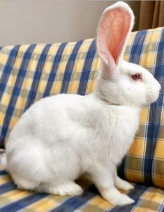 Cute Baby Bunnies, Funny Bunnies, Animals And Pets, Funny Animals, Rabbit Wallpaper, Giant Bunny, Rabbit Life, Rabbit Pictures, Funny Rabbit