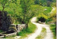 6^ Malgalonga  Domenica 29 giugno 2014 si terrà l'annuale MALGALONGA di Fosse, un'escursione enogastronomica, non competitiva di circa 10km tra le malghe della Lessinia, per assaporare, immersi tra le bellezze naturali che offre questo territorio, i vini e i prodotti tipici di questa regione.