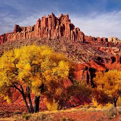Located in south-central #Utah in the heart of red rock country, Capitol Reef #NationalPark is a hidden treasure filled with cliffs, canyons, domes and bridges. Pictured here are cottonwood trees in front of the Castle in #CapitolReef.  Photo by Glenn Nagel (www.sharetheexperience.org). (via #spinpicks)