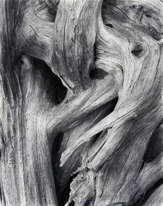 Paul Strand • Driftwood, Gaspé. 1929