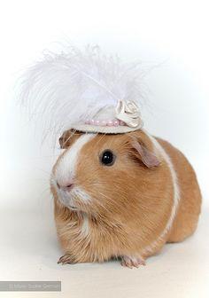 My guinea pig PUMPKIN - by Marie-Sophie Germain  www.mariesophiegermain.com