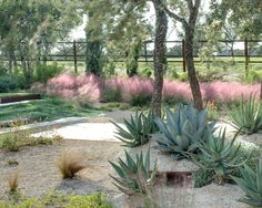 by D-CRAIN Design and Construction | Pink Muhly Grass, Mexican Feather Grass  and agave.