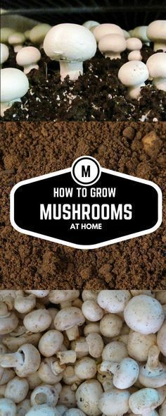 Most people who go in for mushroom growing just go out and buy both the spores (or spawn) and the growth medium. They do this because this is the easiest way to grow mushrooms. But if you are thinking of growing mushrooms commercially Mushroom Plant, Mushroom Grow Kit, Mushroom Spores, Mushroom Cultivation, Growing Mushrooms At Home, Garden Mushrooms, Edible Mushrooms, Stuffed Mushrooms, How To Grow Mushrooms