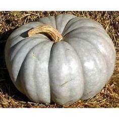 The lovely color of this Jarrahdale pumpkin would be good inspiration.
