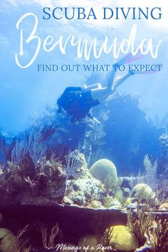 Scuba diving in Bermuda is must for your trip! Shipwrecks, marine life, & clear waters make this a top diving destination. Find out what to expect! Scuba Dive Shop, Cozumel Scuba Diving, Best Scuba Diving, Scuba Diving Gear, Cave Diving, Sea Diving, Maui Vacation, Bermuda Vacations, Cool Deck