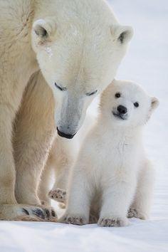 polar bear jokes hee hee ha ha kids wildlife corner
