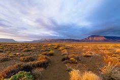 Tankwa Karoo National Park, South Africa. Picture by Taraji Blue