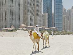 camel - Поиск в Google
