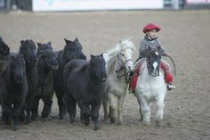 a little gaucho with mini horse tropilla, so cute! Cute Horses, Horse Love, Mini Horses, Animals And Pets, Baby Animals, Cute Animals, All The Pretty Horses, Beautiful Horses, Gaucho
